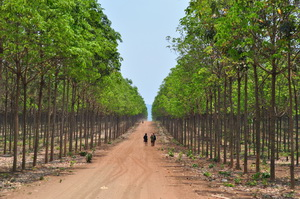 Płaskowyż Bolaven, Laos - 03.2011