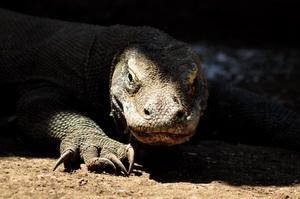 Park Narodowy Komodo, Flores, Indonezja - 07.2011