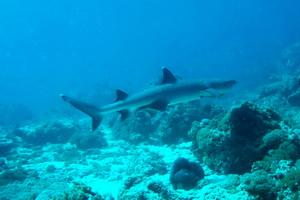 Podwodny świat Celebesu, Indonezja - 06.2011