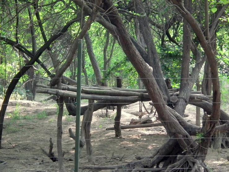 Drewniane konstrukcje na wybiegu dla niedźwiedzi