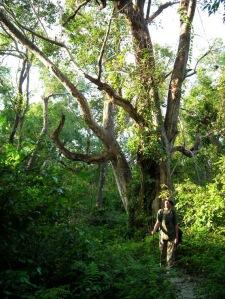 Na tropie dużego zwierza