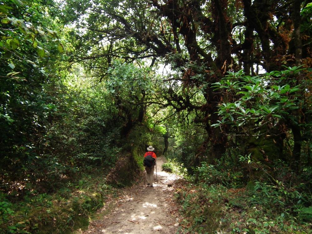 szlak w dżungli