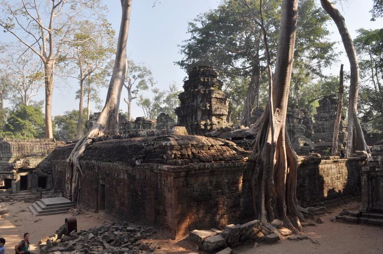 Świątynia Ta Phrom dzięki Tomb Raiderowi nazywana również Świątynią Angeliny Jolie