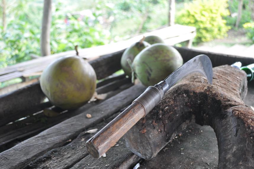 a na szczycie czekają świeże kokosy