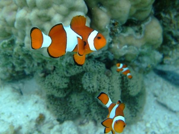 Wara od mojego korala