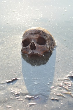 Ludzka czaszka, o której zdaje się nie wiedzieć nikt prócz okolicznych dzieciaków