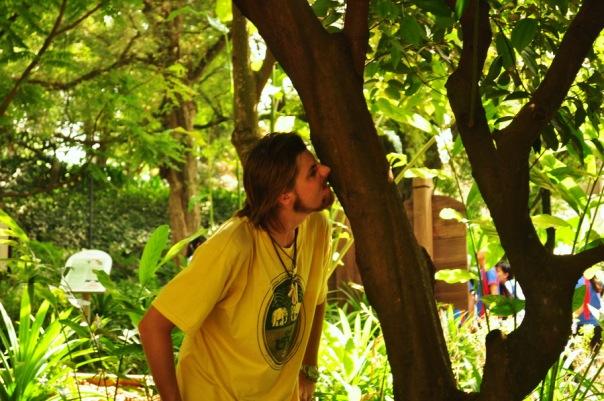 Obwąchiwanie kory drzewa cynamonowego w parku