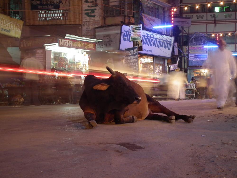 Hinduskie miasta pędzą pełną parą i tylko krowy mają wszysto w nosie