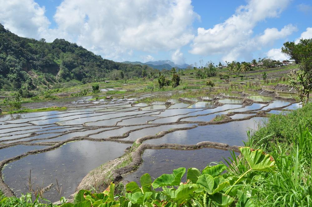 Tarasy ryżowe Floresu, obok tych na Bali, są chyba najpiękniejsze w całej Indonezji
