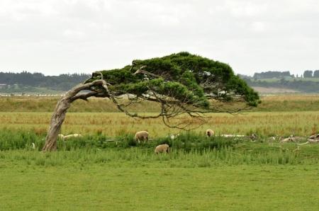 Prognoza na najbliższe dziesięciolecia: Wiatr silny, chwilami porywisty, południowy i południowo-zachodni