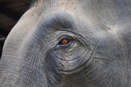Widok płaczącego słonia ujeżdżanego cały dzień przez wrzeszczących turystów i okładanego metalowym hakiem przez właściciela na długo pozostaje w pamięci