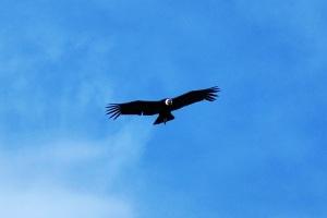 A gdy czekasz na stopa na patagońskiej drodze więcej niż 6 godzin, zaczynają nad Tobą krążyć kondory. Normalnie jak sępy na starych westernach.