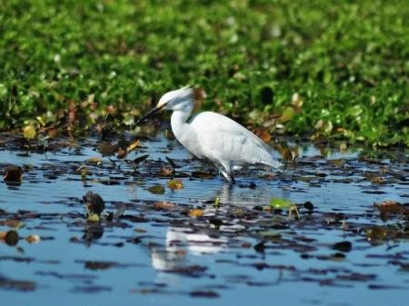 Czaple białe, czarne, niebieskie, jabiru, skrzydłoszpony i setki gatunków innego ptactwa zapewnią ornitologiczne katharsis