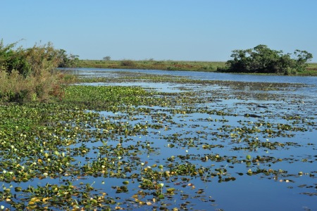 Mokradła Esteros del Ibera