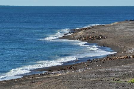 Gdy przychodzi przypływ pełne strachu lwy morskie wylegają na brzeg, by przeczekać ataki orek. Jedynie niektóre maluchy nie nauczyły się jeszcze tej najważniejszej lekcji życia