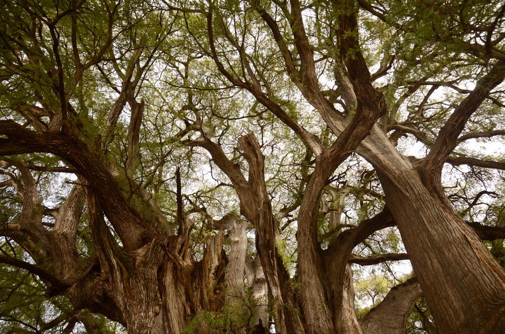 Las konarów